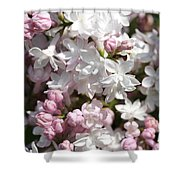 Lilac Named Beauty Of Moscow Shower Curtain