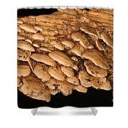 Luminescent Mushroom Panellus Stipticus Shower Curtain