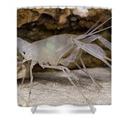 Mclanes Cave Crayfish Shower Curtain
