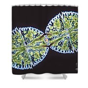 Micrasterias Denticulata Shower Curtain