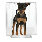 Miniature Pinscher Puppy Shower Curtain