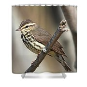 Northern Waterthrush Shower Curtain
