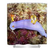 Nudibranch Feeding On Algae, Papua New Shower Curtain