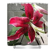 Orienpet Lily Named Scarlet Delight Shower Curtain