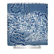 4 Phase Contrast- Candida Albicans Shower Curtain