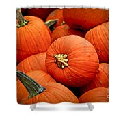 Pumpkins Shower Curtain by Elena Elisseeva