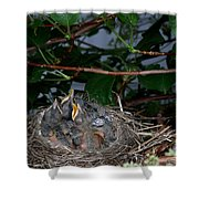 Robin Nestlings Shower Curtain