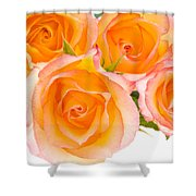 4 Roses Over White Shower Curtain