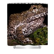 Rusty Robber Frog Shower Curtain