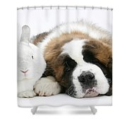 Saint Bernard Puppy With Rabbit Shower Curtain