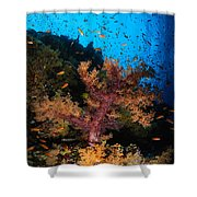 Soft Coral Seascape, Fiji Shower Curtain