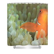 Spinecheek Anemonefish In Anemone Shower Curtain
