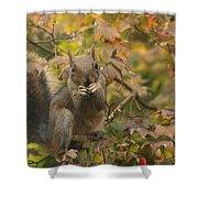 Squirrel Dinner Shower Curtain
