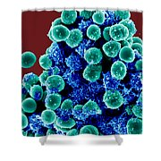 Staphylococcus Epidermidis Bacteria, Sem Shower Curtain by Science Source