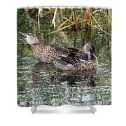 Teal Ducks Shower Curtain