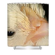 White Leghorn Chick Shower Curtain