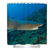 Whitetip Reef Shark, Kimbe Bay, Papua Shower Curtain