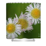Wildflower Named Robin's Plantain Shower Curtain