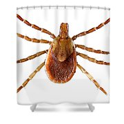 Yellow Dog Tick Shower Curtain