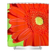 4005-002 Shower Curtain