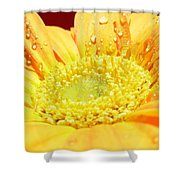 4174 Shower Curtain