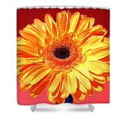 4178.1c Shower Curtain