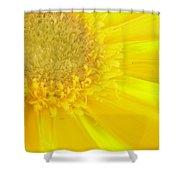 4705-001 Shower Curtain