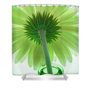 4782c Shower Curtain