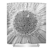 49041-3 Shower Curtain