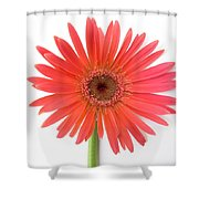 4956 Shower Curtain