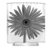 495651 Shower Curtain