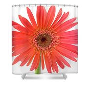 4961 Shower Curtain