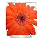 4992c Shower Curtain