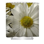 A Bouquet Of Chrysanthemums Shower Curtain