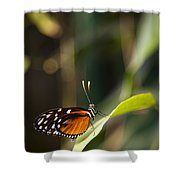 A Butterfly Rests On A Leaf Shower Curtain