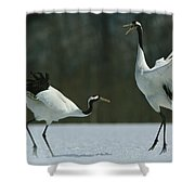 A Pair Of Japanese Or Red Crowned Shower Curtain
