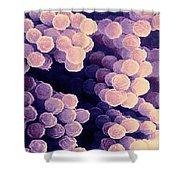 Aspergillus Shower Curtain