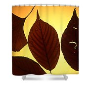 5 Autumn Leaves Shower Curtain