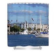 5- Black Skimmers Shower Curtain