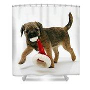 Border Terrier Puppy Shower Curtain