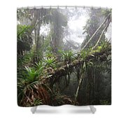 Bromeliad Bromeliaceae And Tree Fern Shower Curtain