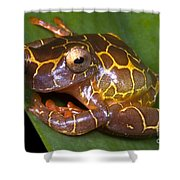 Clown Tree Frog Shower Curtain