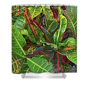 5- Croton Shower Curtain