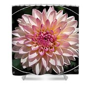 Dahlia Named Valley Porcupine Shower Curtain