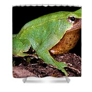Darwins Frog Shower Curtain