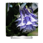 Double Columbine Named Light Blue Shower Curtain