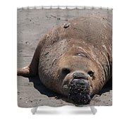 Elephant Seal Colony On Big Sur  Shower Curtain