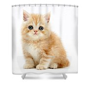 Ginger Kitten Shower Curtain