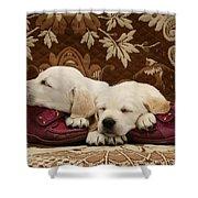 Goldidor Retriever Puppies Shower Curtain