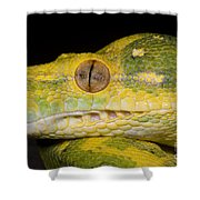 Green Tree Python Shower Curtain